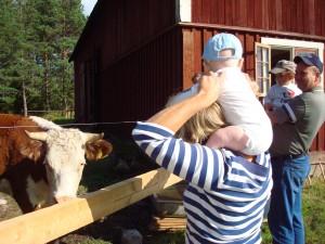 Wilmer tittar på kossorna från mormors axlar.