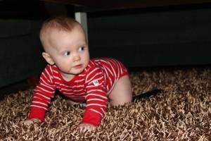 Wilmer lärde sig krypa och ålar sig nu runt i en väldig fart!